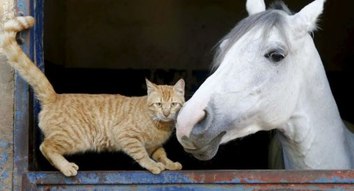 chat et cheval