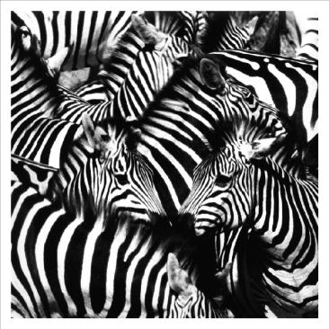 animaux-africains-art-peinture-c3a0-l-huile-belle-noir-et-blanc-zc3a8bres-tableaux-imprimc3a9s-sur-toile (1)