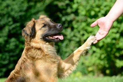 choisir-friandises-chien